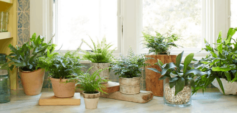 Plants & Window Film