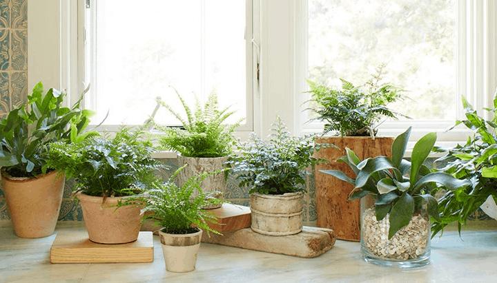 Plants & Window Film I Victoria BC